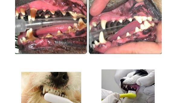 Tártaro dentário – O seu animal tem um hálito estranho?